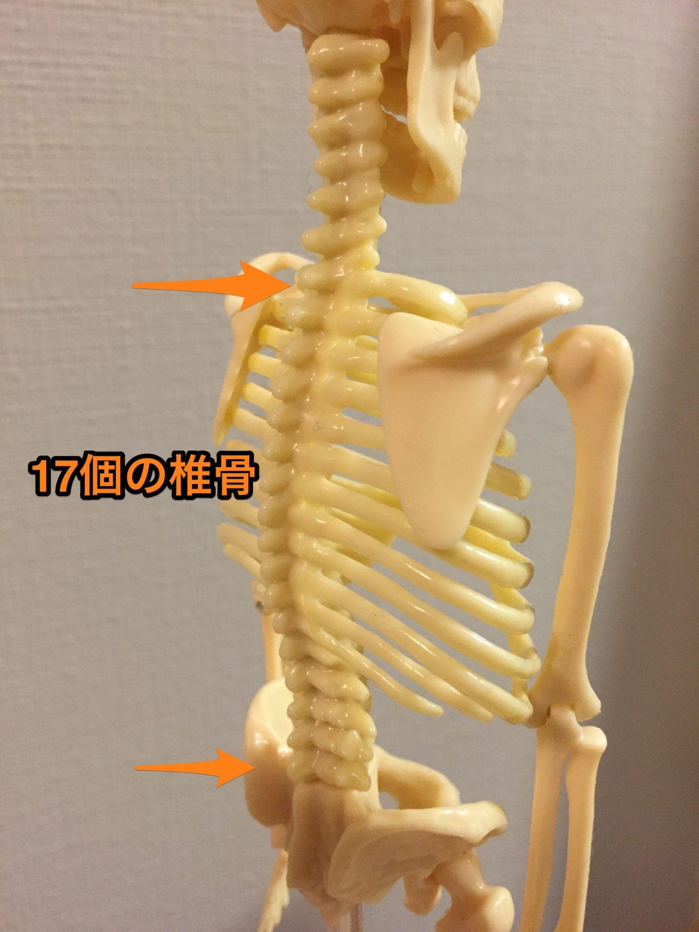 肩こり、腰痛に効く、背骨を感じるエクササイズ