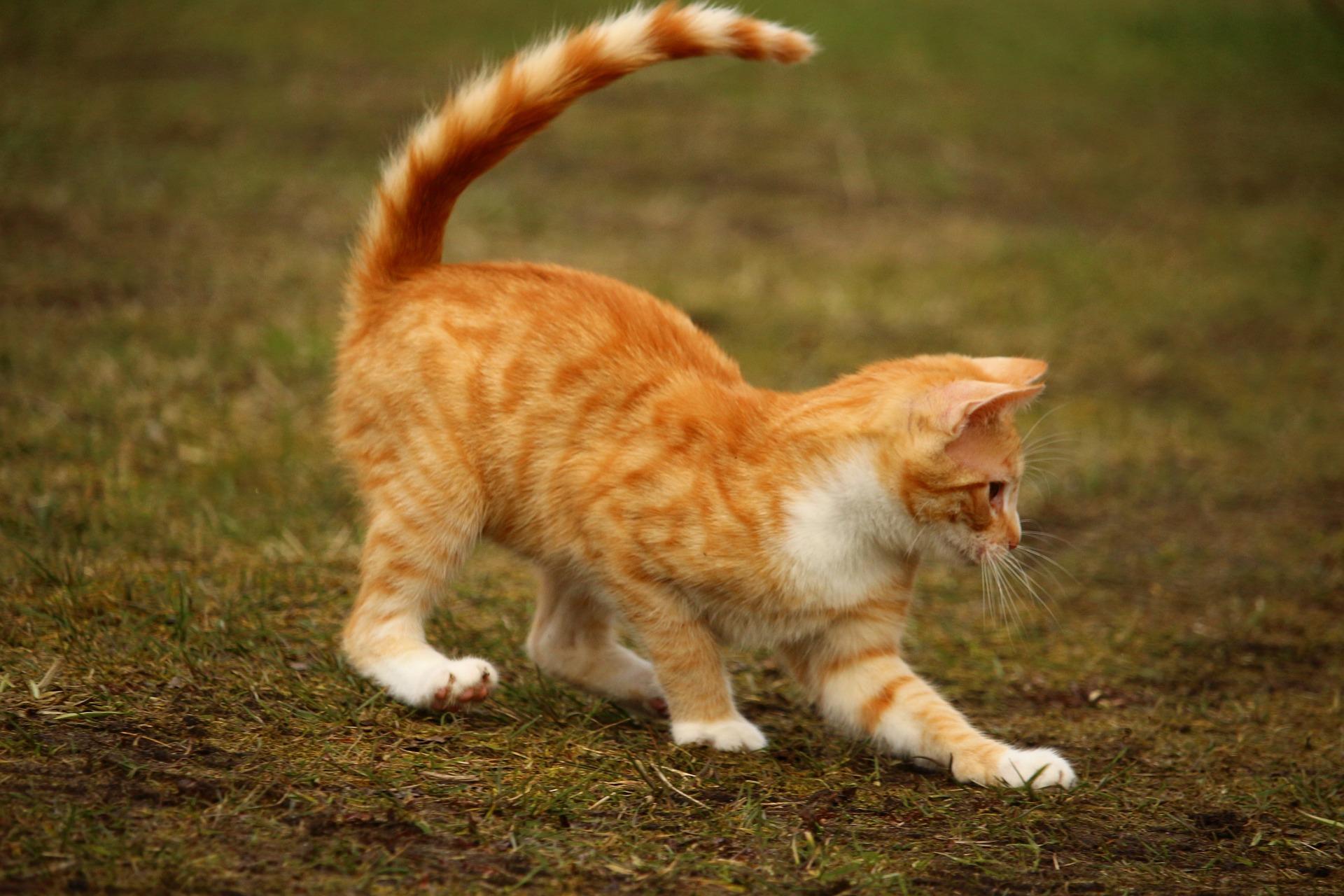 猫背などの姿勢改善すると、メンタル面での変化はありますか?の質問について